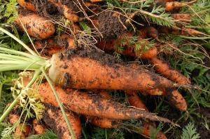carrot-551661_1920
