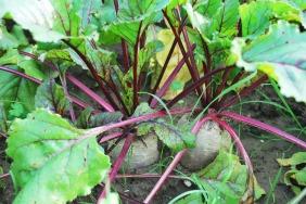 vegetables-742094_1920