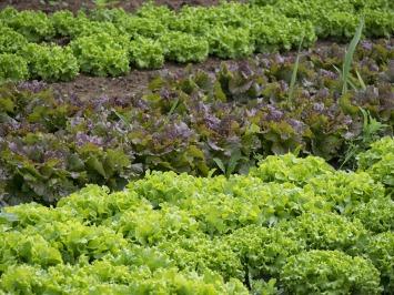 vegetables-861363_1920